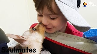 Download Boy And His Baby Kangaroo Are Inseparable | The Dodo Soulmates Video