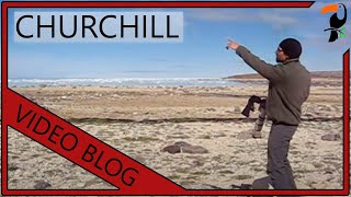 Download Bird Photography Workshop - Churchill, Manitoba (With Wildlife Photographer Glenn Bartley) Video