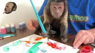 Download MonkeyBoo Art Work! Video