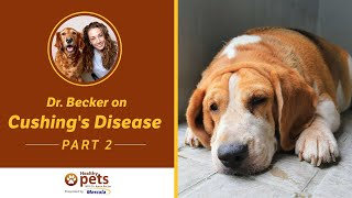 Download Dr. Becker on Cushing's Disease (Part 2 of 3) Video
