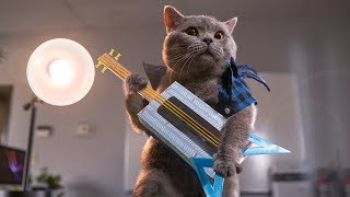 Download Office Cats Video