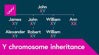 Download How is the Y chromosome passed down by males through the generations? Video