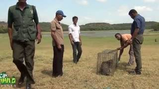 Download Release of fishing cat ! Video