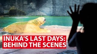 Download Inuka's Last Days: Behind The Scenes With Singapore's Last Polar Bear | Talking Point | CNA Insider Video