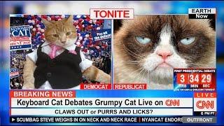 Download Keyboard Cat Debates Grumpy Cat On CNN! Video