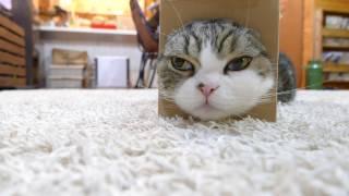 Download 箱とねこ21。-Box and Maru 21.- Video