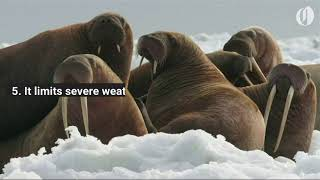 Download 7 reasons why Arctic sea ice matters Video