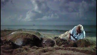 Download Saving Leatherback Turtles In Trinidad | Blue Planet II Video
