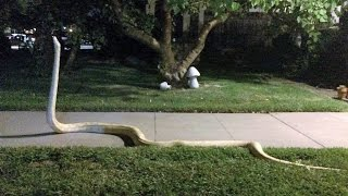 Download 14 Scariest Snake Pictures Explained Video