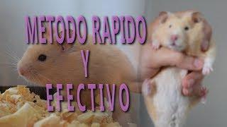 Download COMO HACER QUE MI HAMSTER NO ME MUERDA / TUTORIAL COMPLETO Video