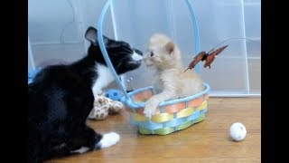 Download Kitkat Playroom: Tater Eats Gushies from a Bowl, with Special Guest Star - SIDNEY! Video