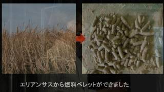 Download Hardy Pampas Grass, Erianthus, and the Power of Weeds | Mitsuru Gau | TEDxKumamotoshi Video