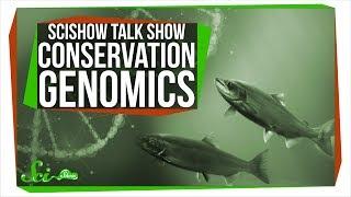 Download Conservation Genomics and Kizmit the Porcupine: SciShow Talk Show Video