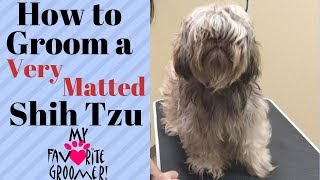 Download How to Groom a Shih Tzu Very Matted Video