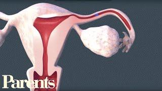 Download How Sperm Meets Egg | Parents Video