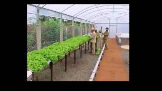 Download Soluções para Produção Sustentável de Alimentos Orgânicos em Sistemas Aquapônicos Video