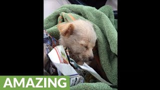 Download Rescued homeless dog goes through amazing transformation Video