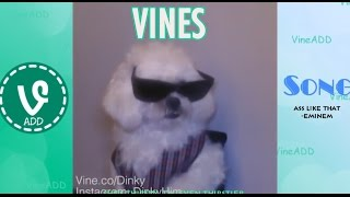 Download Ultimate Vines Compilation 2014 - 400+ VINES - 40 minutes! Video