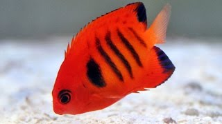 Download Top 20 Most Beautiful Fishes in the World Video