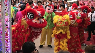Download Rooster Year 2017 Pavilion Acrobatic Lion Dance (3)鼓声舞獅, 普天同庆福禄来 Video
