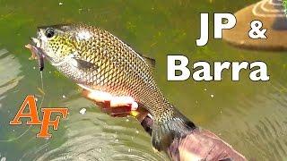 Download Lure Fishing Video Jungle Sight Fishing Barramundi & Jungle Perch Andysfishing EP.82 Video