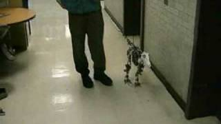 Download MIT Leg Lab Robots Video