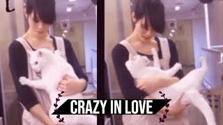 Download [NEKO TIME] crazy japanese cat loves his human - 池袋のねころび Cat Cafe Video