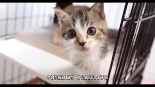 Download 保護した子猫 キャットケージへ Video