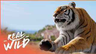 Download Animal Attack: Everyone's Worst Nightmare! | Human Prey | Wild Things Channel Video