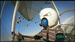 Download The Secret Routes of Migratory Birds Video