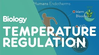 Download Temperature Regulation of the Human Body | Biology for All | FuseSchool Video