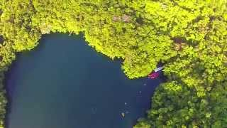 Download Jellyfish Lake Palau 2015 Video