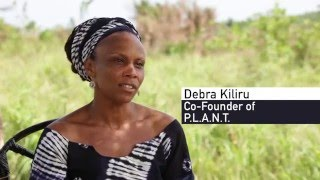 Download Agroforestry: a solution to deforestation Video