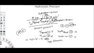 Download Hydrostatic Pressure and Permeability Video