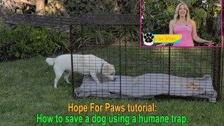 Download Hope For Paws tutorial: How to save a dog using a humane trap. Video