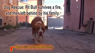 Download Pit Bull survives a fire, and then left behind by his family. Please Share. Video
