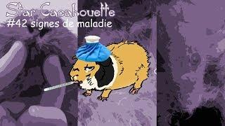 Download StarCacahouette #42 signes de maladie chez un cochon d'Inde Video
