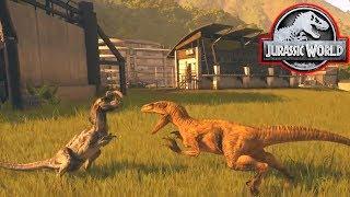 Download VELOCIRAPTOR vs DILOPHOSAURUS! - Jurassic World Evolution #9 Video