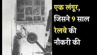 Download एक लंगूर, जिसने 9 साल रेलवे की नौकरी की | Gustakhi Maaf Video