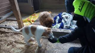 Download 保護母犬テレサと子犬フランとシスコ 落ち着いて食べたらもっと美味しいと思うけど… Video
