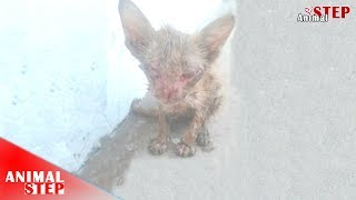 Download Many Generous People Saved this Stray Kitten Video