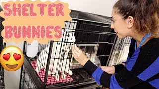 Download Donating Rabbit Toys to Homeless Bunnies at the Shelter Video