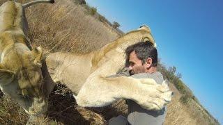 Download Lion Hug Compilation Video