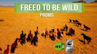 Download Freed to Be Wild Promo. A joint project of RTD with WWF Video