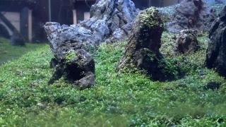 Download Chodroff Aquarium Video