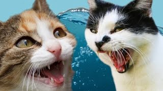 Download Cats Vs. Water Video