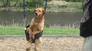 Download Dog in Swing - Dog on Swing - Dogs love swings. Playground. Video