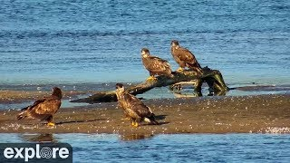 Download Mississippi River Flyway Cam powered by EXPLORE.org Video