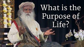 Download What is the Purpose of Life? - Sadhguru Video