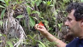 Download Cali Binchi de Guatemala. Video
